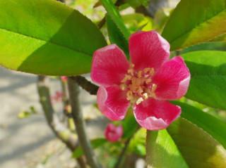 誕生花 花櫚
